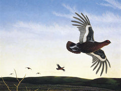 'Grouse on the Wind' by Anthony Veale from £90 at The Prints Gallery. Unmounted Giclee print on Hahnemühle Fine Art Pearl paper.