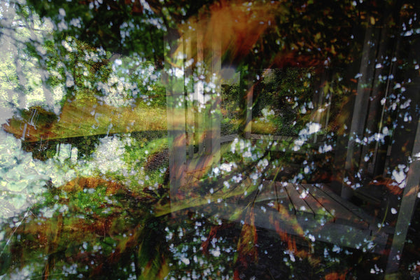 'Leaf Lay' by Laetitia Corbett. A2 photographic print on Hahnemuhle Photo Luster 260gsm paper. £60 from The Prints Gallery