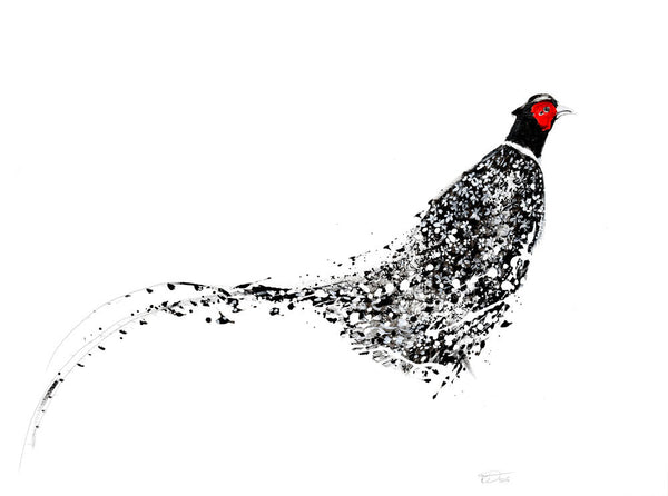Pheasantl by Marissa Weatherhead at The Prints Gallery.  One of a series of black and white prints of birds. £90.