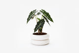 White Tubed Stacking Contemporary Planter