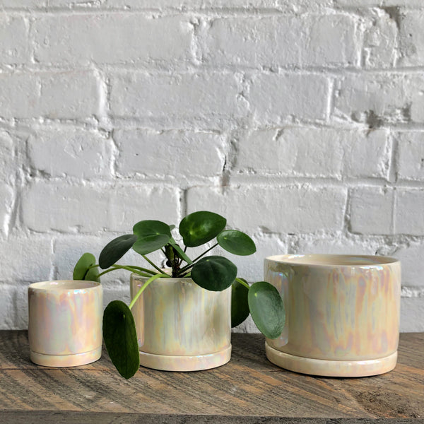Tandem Ceramics Tabletop Planters (more options)