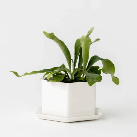 Convivial Hexagon Planter