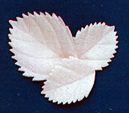 Hydrangea/Large Rose Leaf - White