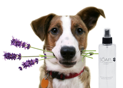 Pet Spa Lavender Finishing Spray