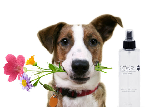 Pet Spa Sandalwood Finishing Spray