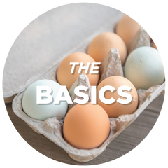 eggs in a carton - click to view basic recipes