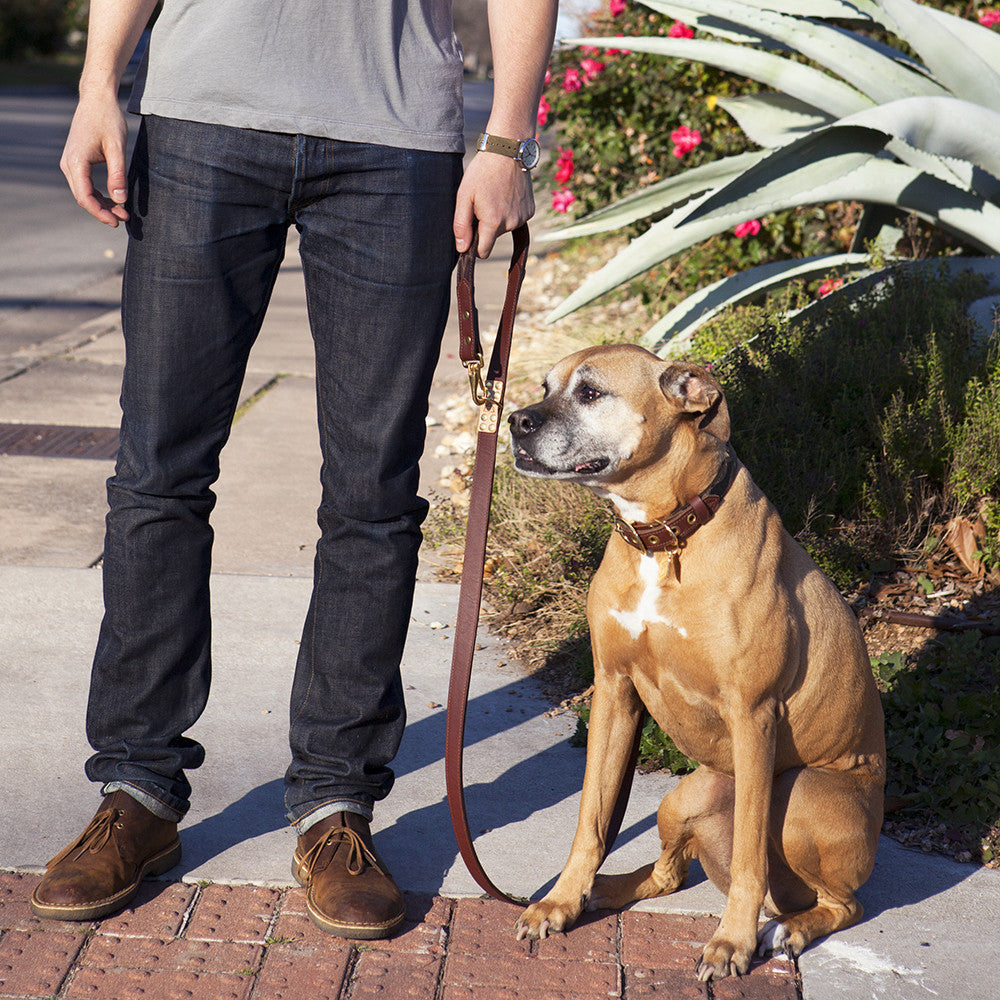 Four Way Mahogany Brown Leather Dog Leash (normal)
