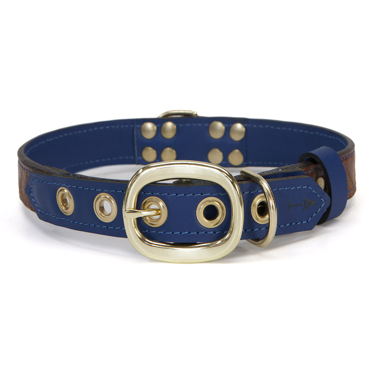 Royal Blue Dog Collar with Brown Leather + Orange/Light Green Spike Stitching (back view)