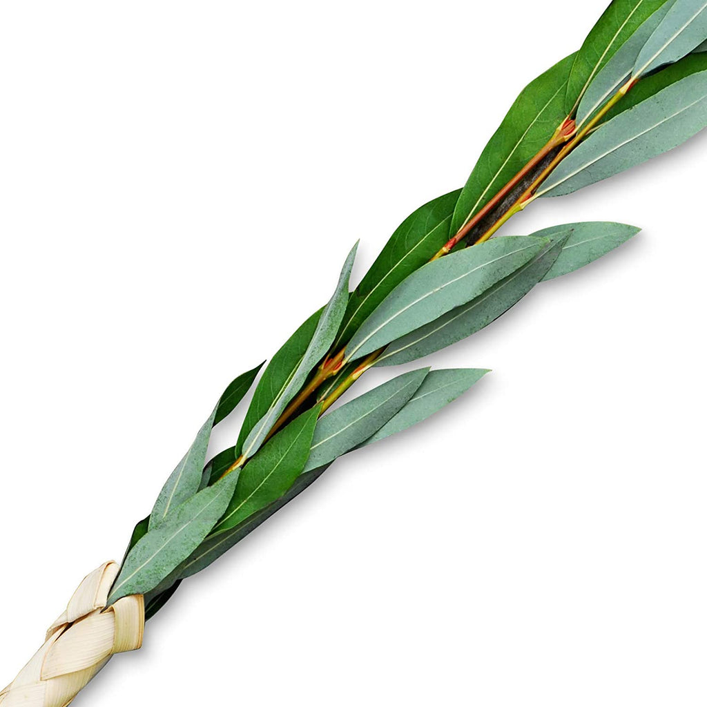Extra Set of Arovot (Willow) - Lulav and Etrog