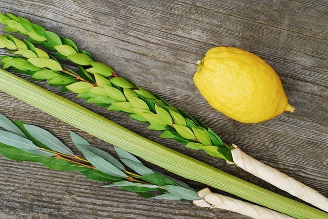 Basic Kosher Lulav and Etrog set from Israel - Lulav and Etrog