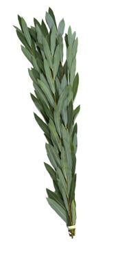 Arovos for Hoshanos (5 Pack) - Lulav and Etrog