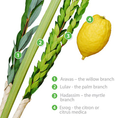 Basic Kosher Lulav and Etrog set from Israel