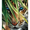 Tiger Blue Eyes 1000pc Puzzle
