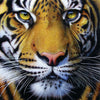 Tiger Face 1000pc Puzzle