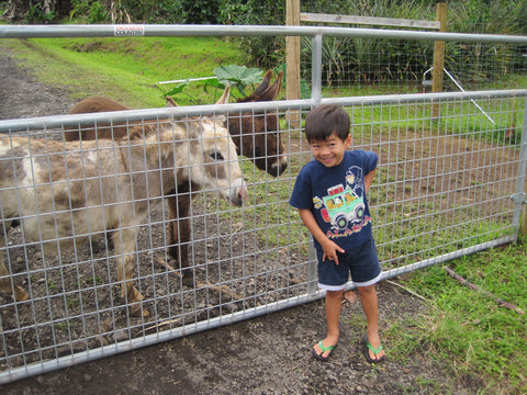 Kona Mountain Thunder Donkeys
