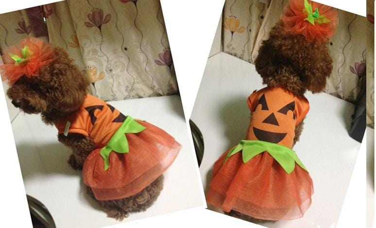 COSTUME PUMPKIN SET PETS - Christmas World
