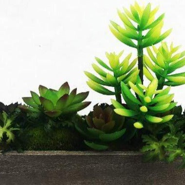 Succulent Set in Wood
