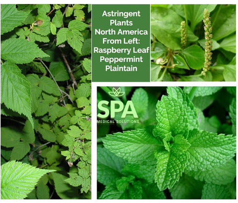 Astringent Plants for Rapid Healing of Bruises Scars Scrapes and Injuries to the Skin