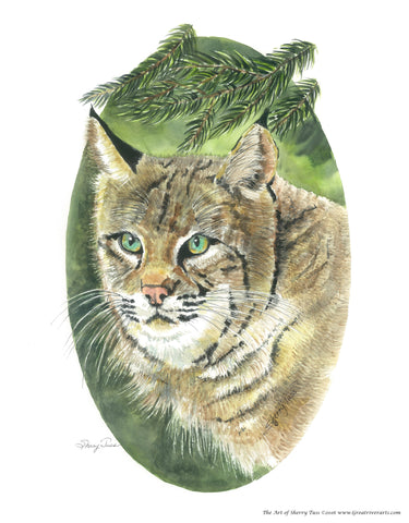 The Art of Sherry Tuss: Bobcat