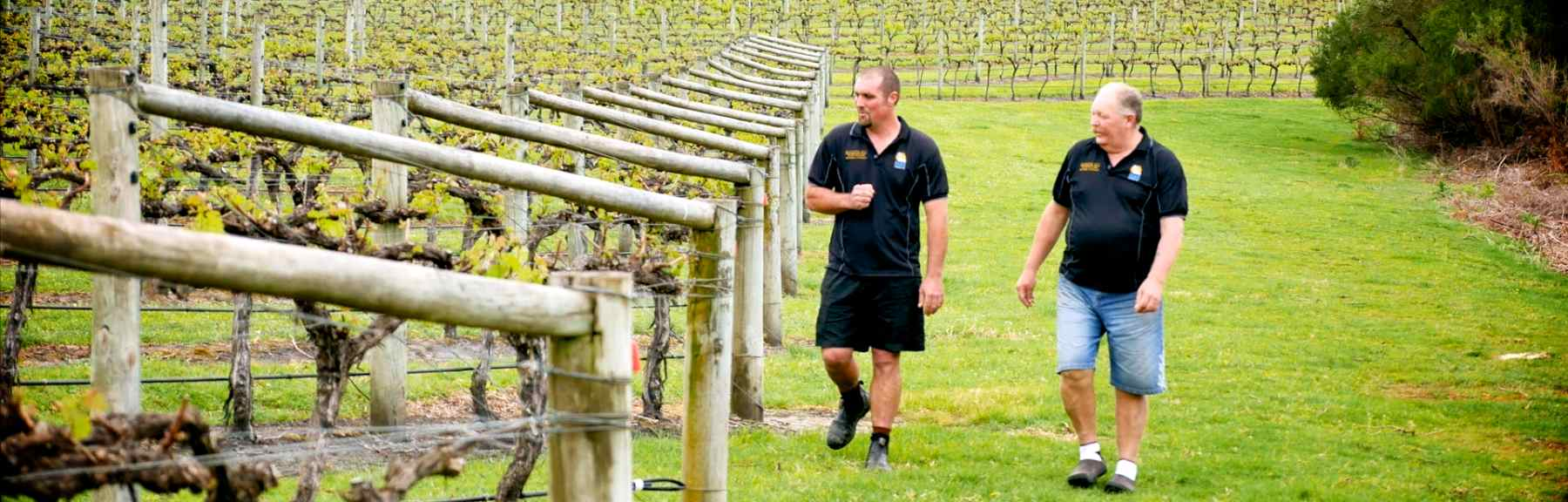 Ben and Ross Lewis walking through the vineyard in Denmark.