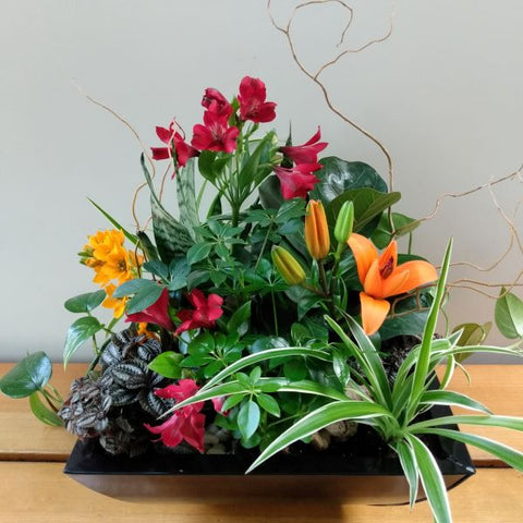 Tropical Garden Planter