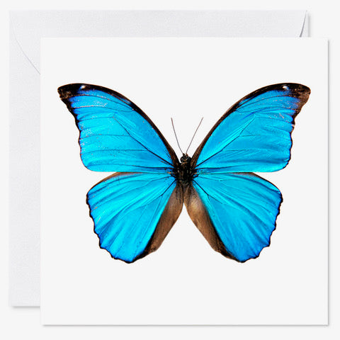 "5"" x 5"" Butterfly Card Blue"