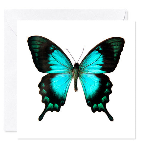 "5"" x 5"" Butterfly Card Teal"