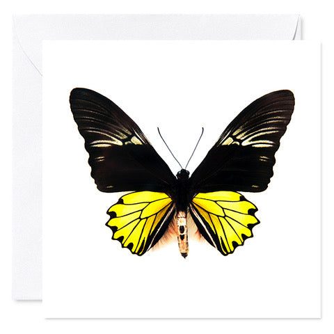 "5"" x 5"" Butterfly Card Yellow"