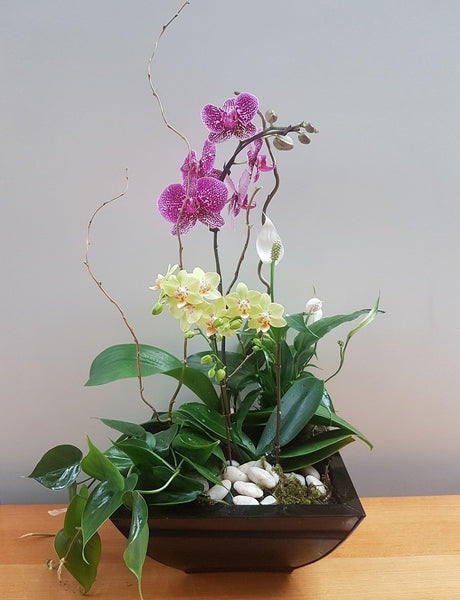 Tropical Orchid Planter