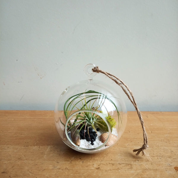 Sphere Hanging Air Plant Terrarium