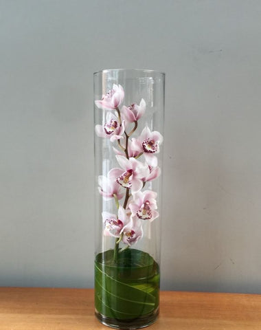 Cylinder Orchid
