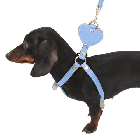AMYLOVESPET Angel harness (heart),Blue