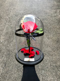 The Enchanted Rose - Delivery from the 22nd of Dec