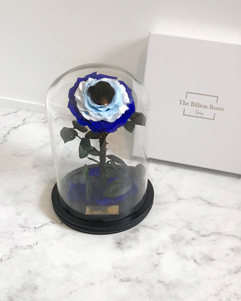 Evil Eye Enchanted Rose - Real rose that last more than a year