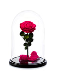 The Enchanted Rose - Real rose that last more than a year