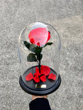 The Enchanted Rose - Rose that last one year