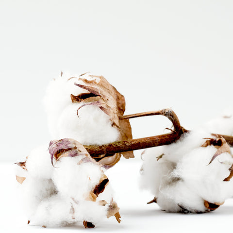 What is the difference between Cotton & Organic Cotton?