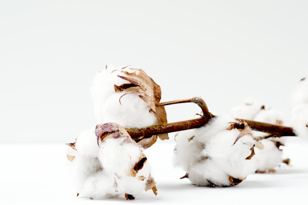 Organic Cotton vs Conventional Cotton what is the difference?