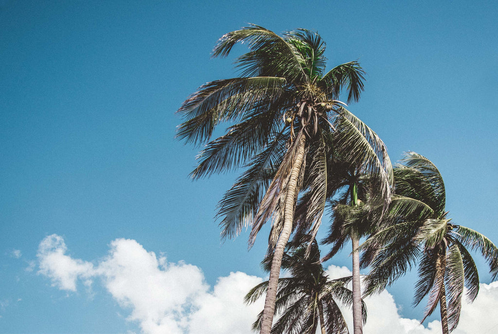 La Luna Rose Tropical Holiday Packing List