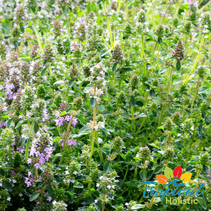 Clary Sage for Hormone Balance