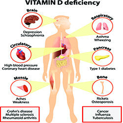 An Overview of the D Vitamin