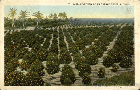 Vintage Florida Citrus Grove Postcard from Cardcow.com