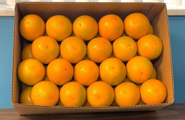 Box of Valencia Oranges from Florida