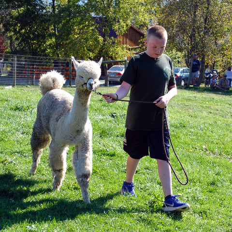 ALPACA WALKING DEMO (Single Ticket)