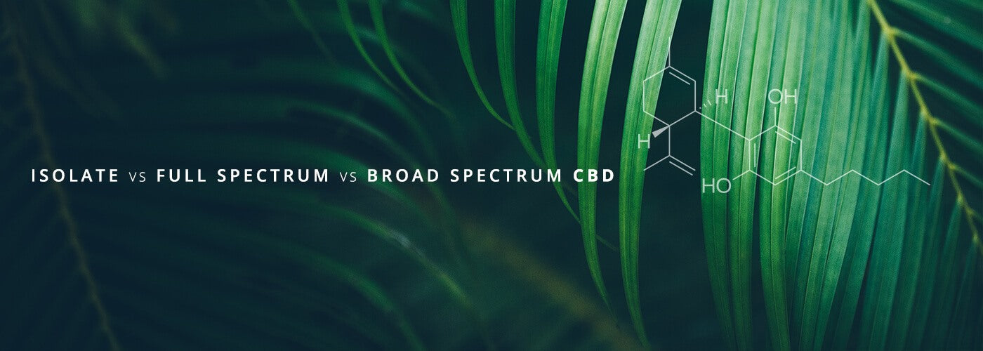 Isolate vs Full Spectrum vs Broad Spectrum CBD