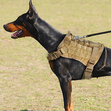 Tactical Dog Vest - Bearded Lion