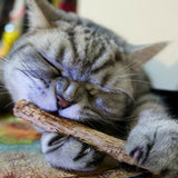 Matatabi Cat Dental Sticks