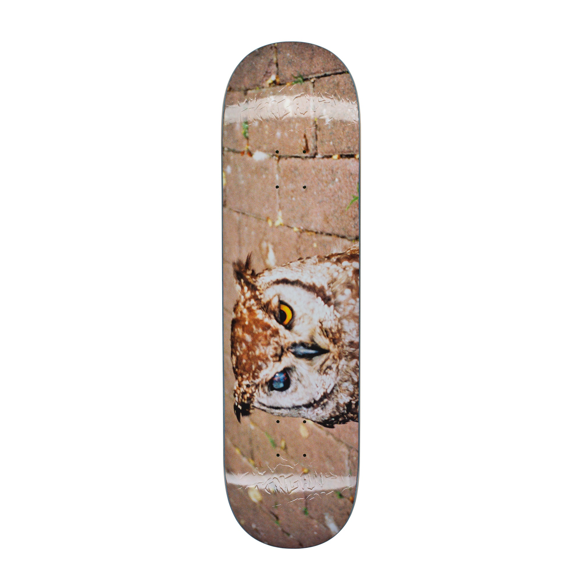 Fucking Awesome Owl Photo Jason Dill  Deck - 8.18""
