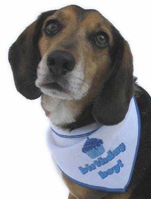 Perfect Birthday Boy Dog Scarf Puppy's Home