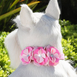 "Alexandra Flowers Dog Collar 1/2"" wide by Susan Lanci Puppy's Home"